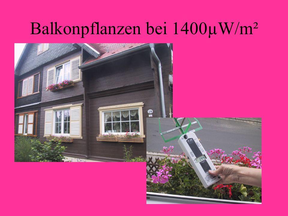 Balkonpflanzen bei 1400µW/m²