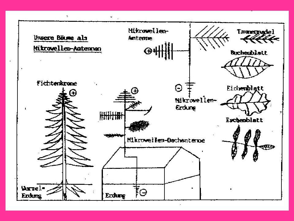 Unsere Bäume als Mikrowellenantennen
