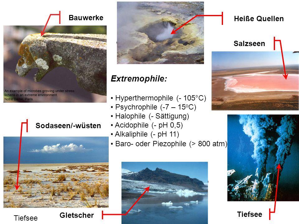Extremophile:: Bauwerke Heiße Quellen Salzseen
