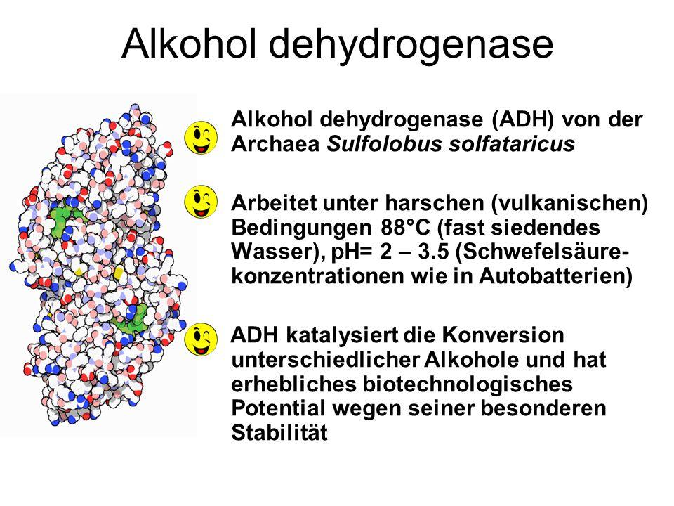 Alkohol dehydrogenase