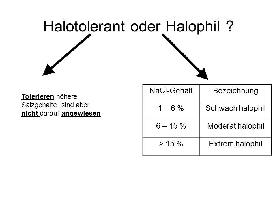 Halotolerant oder Halophil