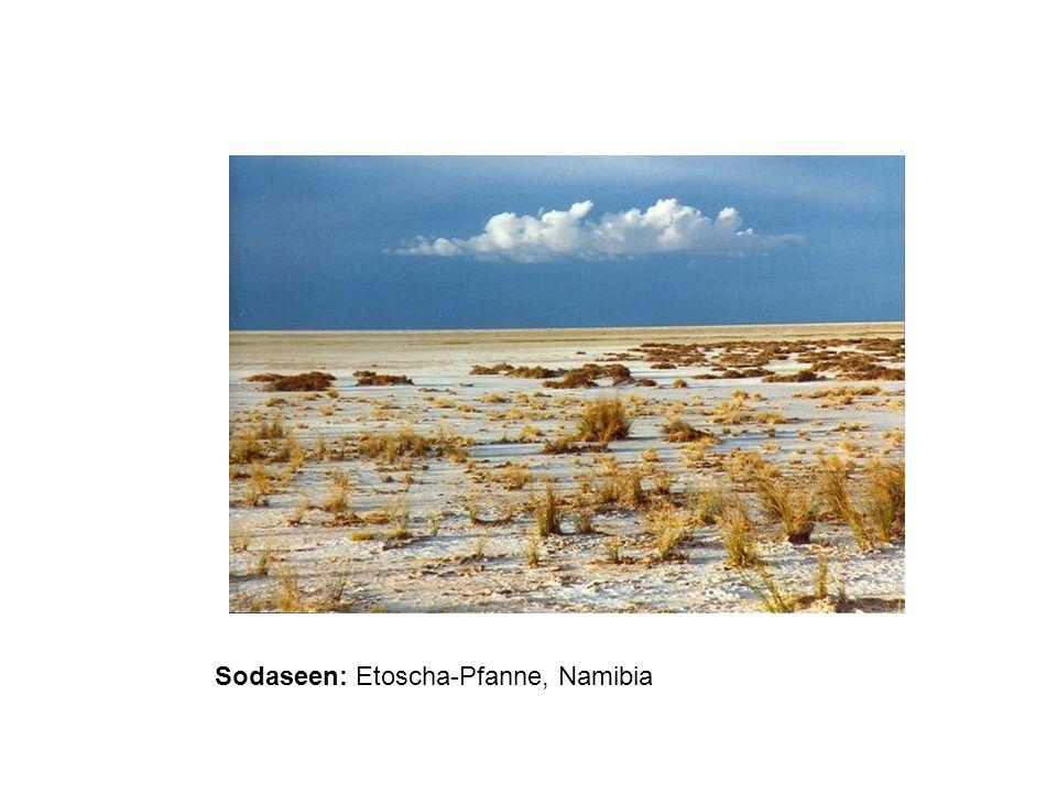 Sodaseen: Etoscha-Pfanne, Namibia