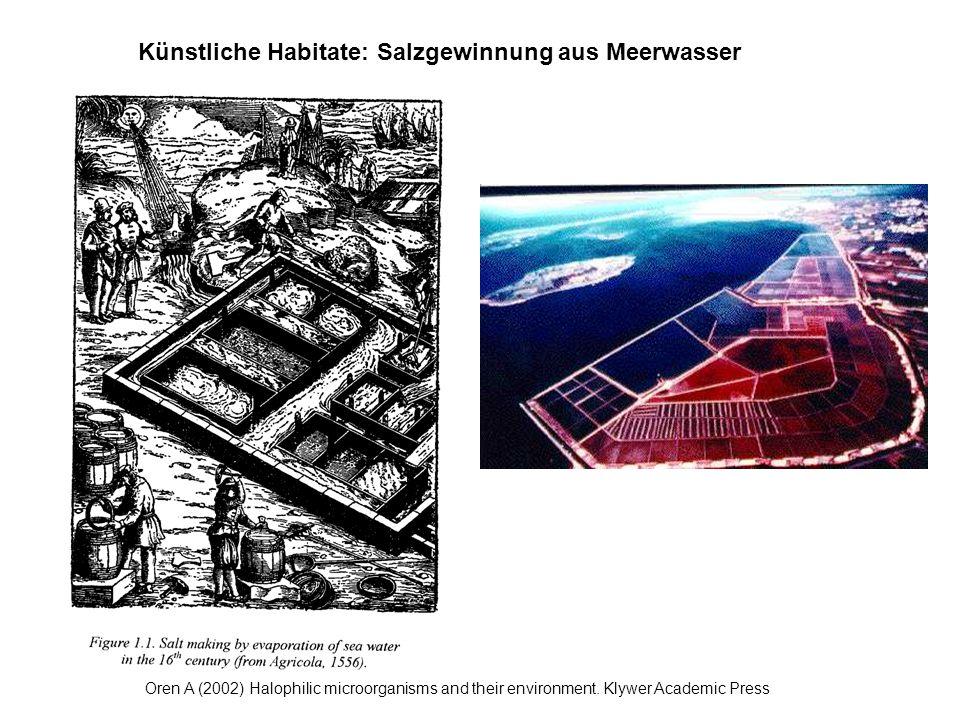 Künstliche Habitate: Salzgewinnung aus Meerwasser