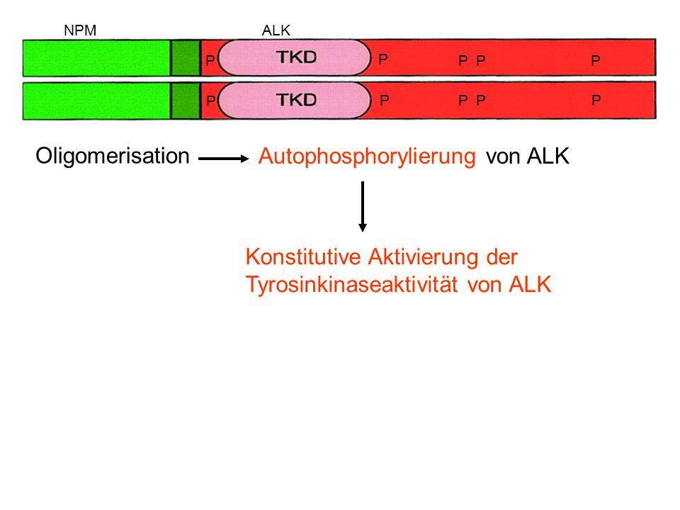 Autophosphorylierung von ALK