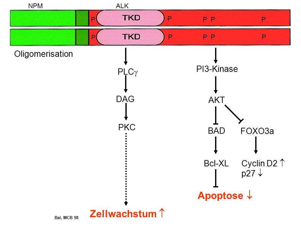 Apoptose  Zellwachstum  Oligomerisation PI3-Kinase PLC DAG AKT PKC