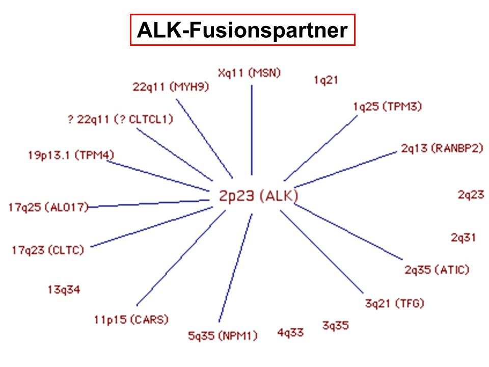 ALK-Fusionspartner