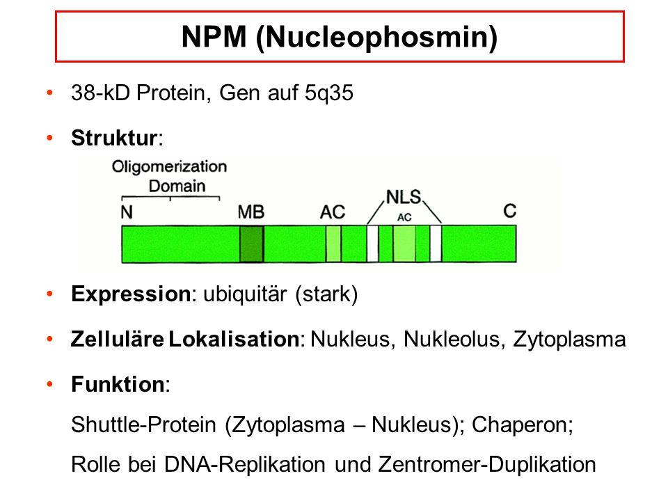 NPM (Nucleophosmin) 38-kD Protein, Gen auf 5q35 Struktur: