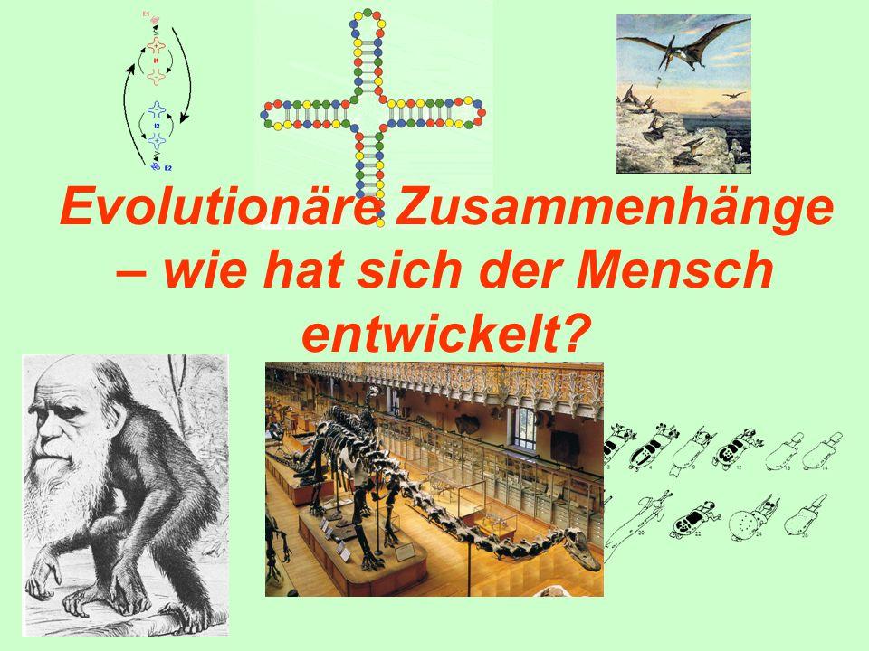Evolutionäre Zusammenhänge – wie hat sich der Mensch entwickelt