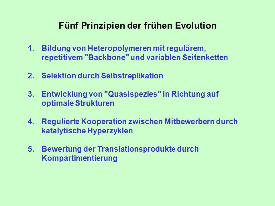 Fünf Prinzipien der frühen Evolution