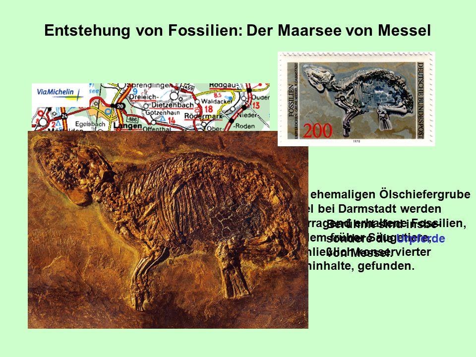 Entstehung von Fossilien: Der Maarsee von Messel