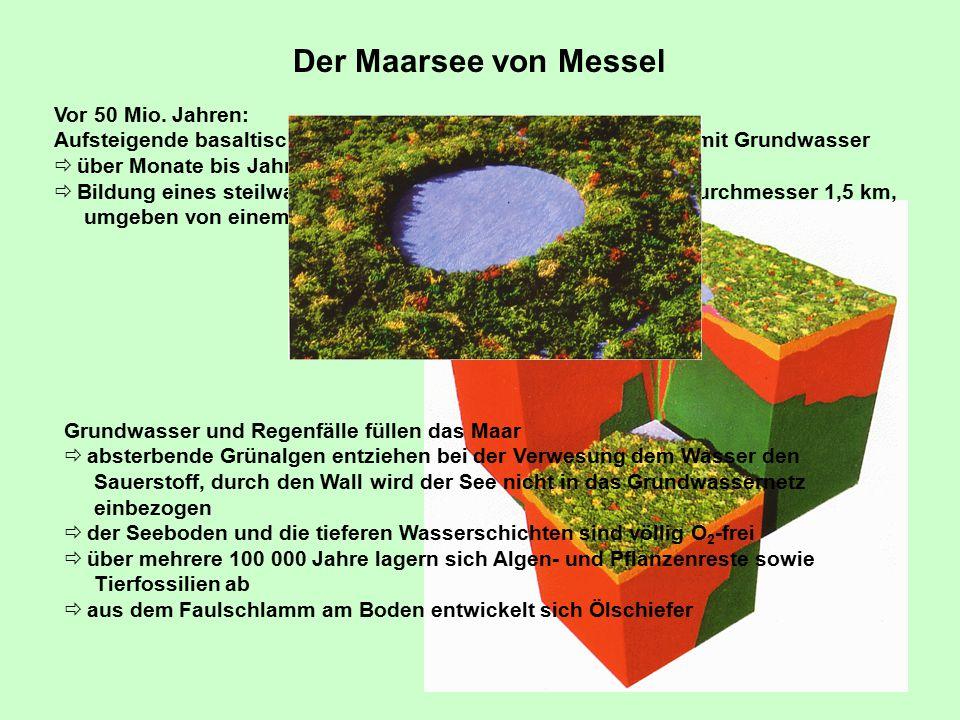 Der Maarsee von Messel Vor 50 Mio. Jahren:
