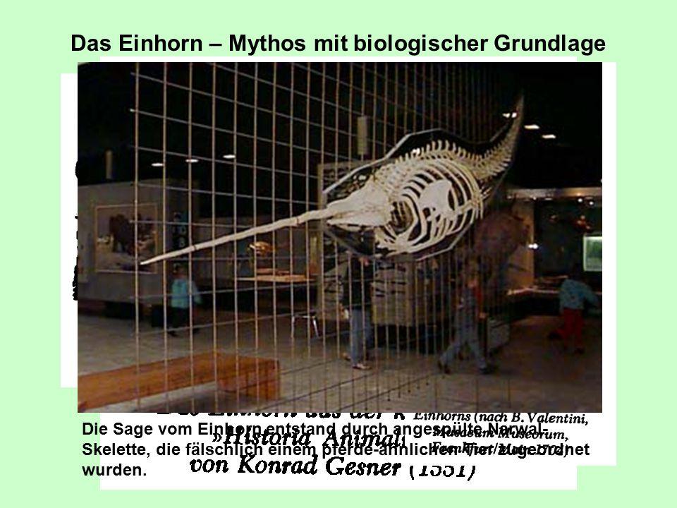 Das Einhorn – Mythos mit biologischer Grundlage