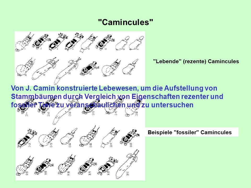 Camincules Lebende (rezente) Camincules.