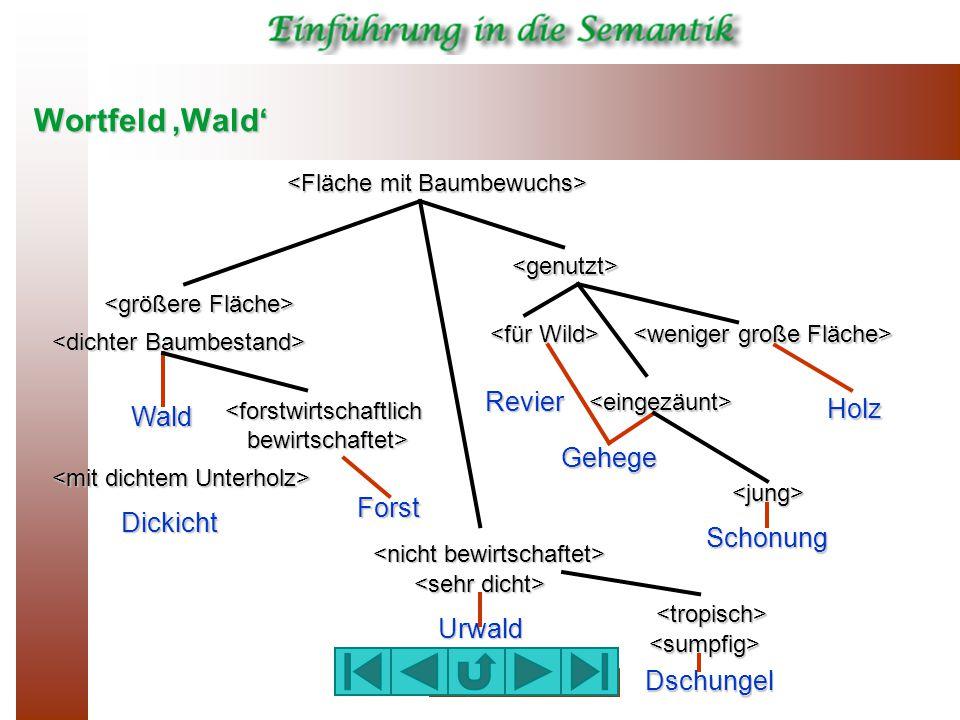 Wortfeld 'Wald' Revier Holz Wald Gehege Forst Dickicht Schonung Urwald