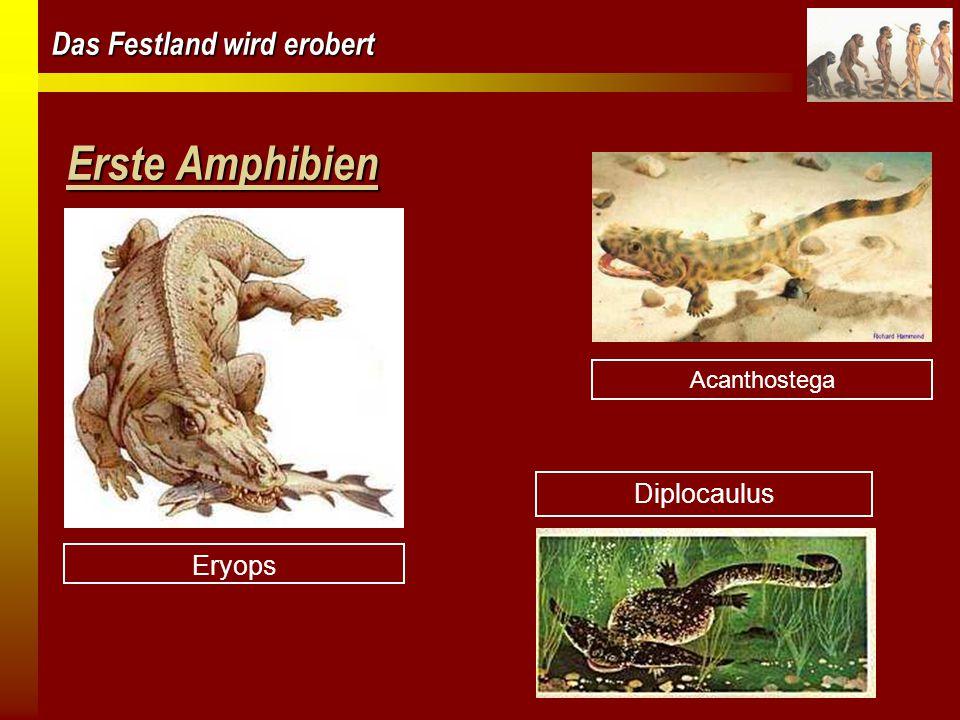 Erste Amphibien Acanthostega Eryops Diplocaulus
