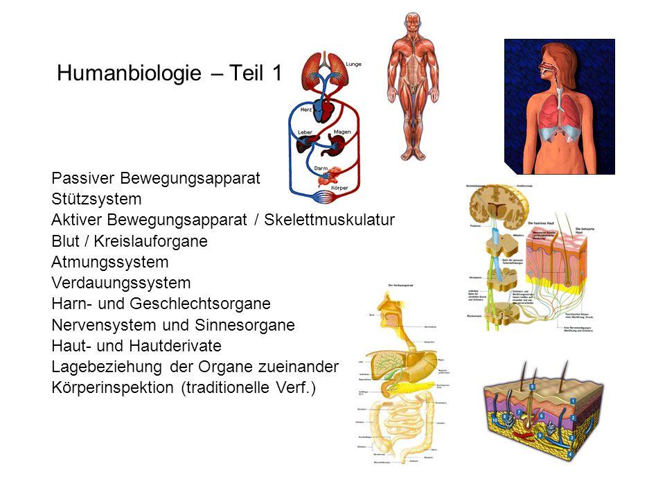 Humanbiologie – Teil 1 Passiver Bewegungsapparat Stützsystem