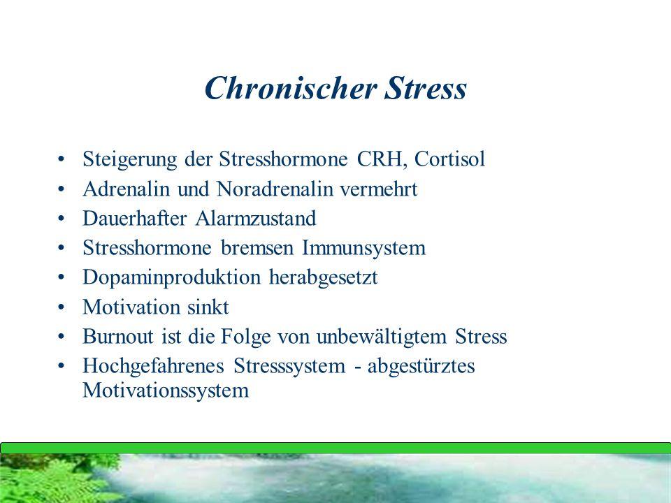 Chronischer Stress Steigerung der Stresshormone CRH, Cortisol