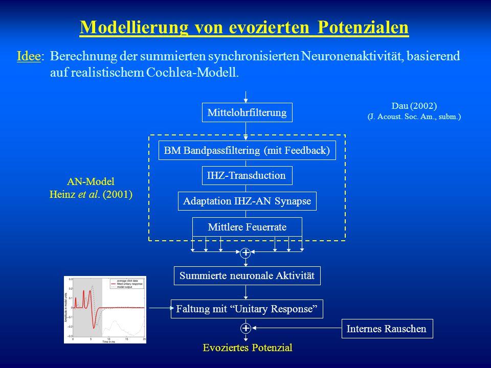 Modellierung von evozierten Potenzialen