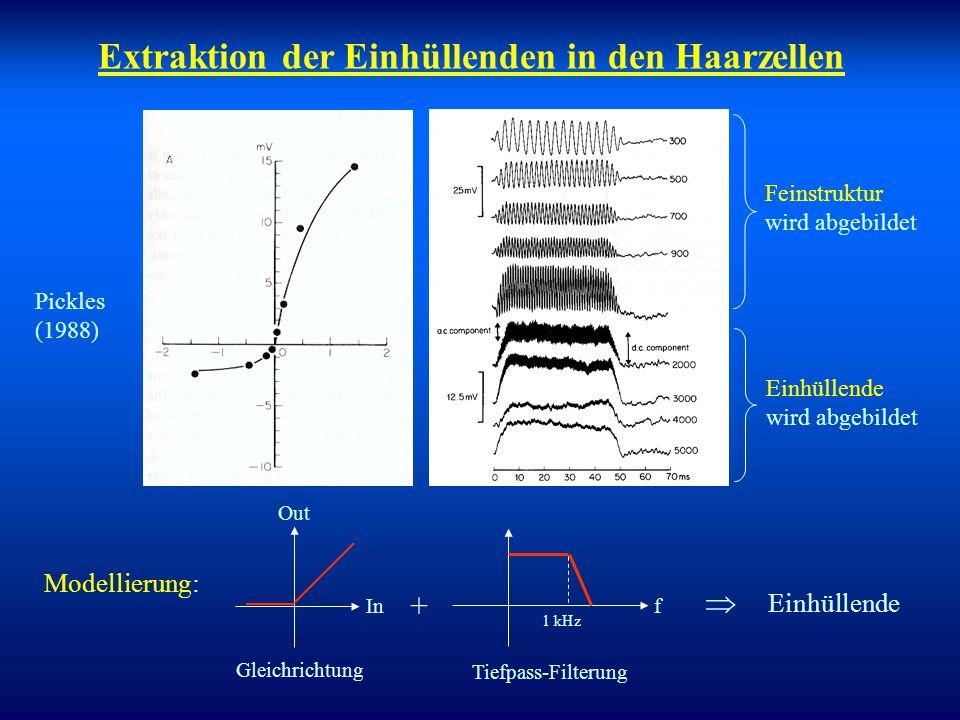 Extraktion der Einhüllenden in den Haarzellen