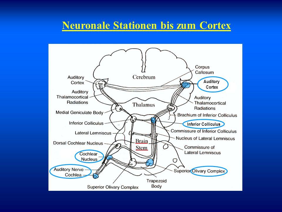 Neuronale Stationen bis zum Cortex