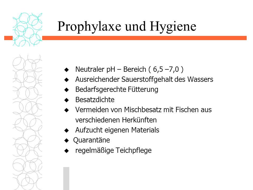 Prophylaxe und Hygiene