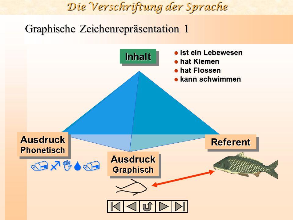 Graphische Zeichenrepräsentation 1