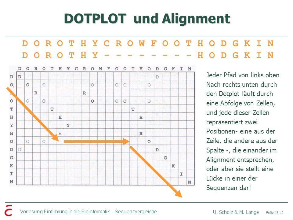 DOTPLOT und Alignment D O R O T H Y C R O W F O O T H O D G K I N