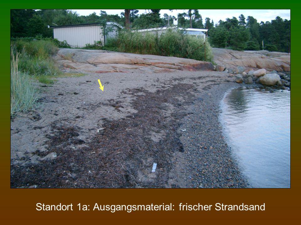 Standort 1a: Ausgangsmaterial: frischer Strandsand