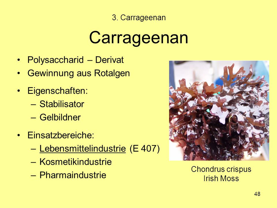 Chondrus crispus Irish Moss
