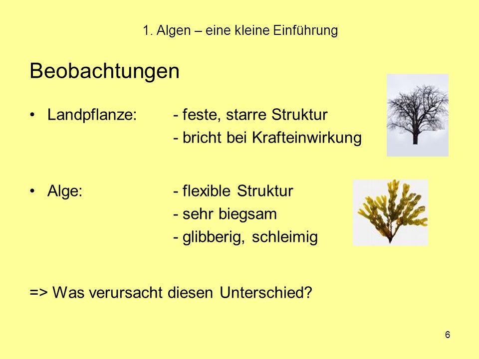 1. Algen – eine kleine Einführung