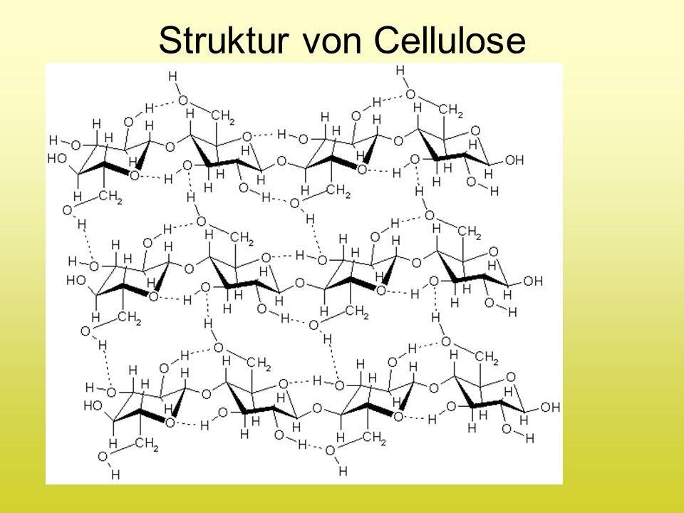 Struktur von Cellulose