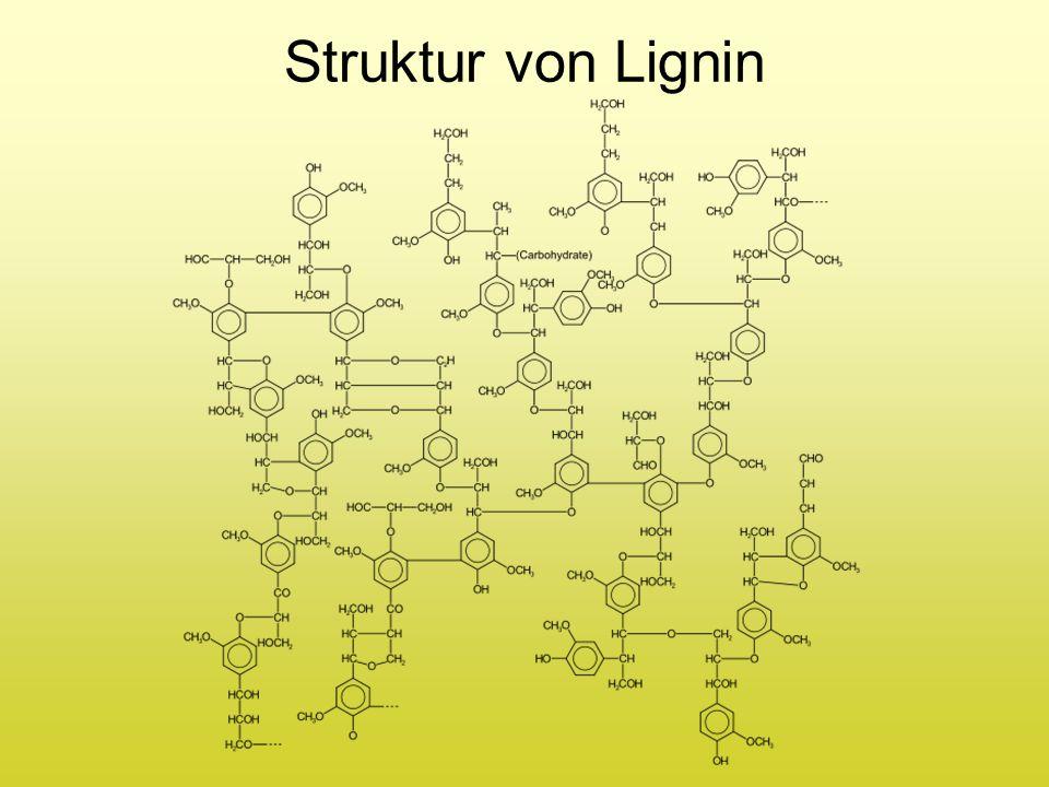 Struktur von Lignin