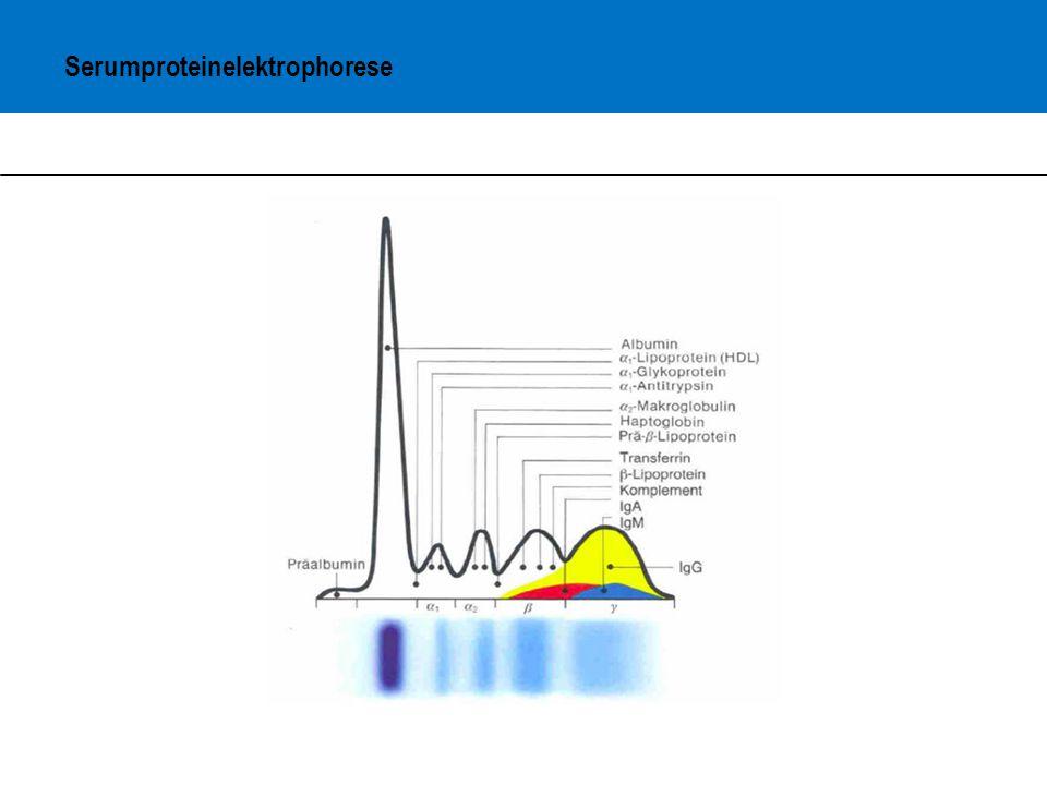 Serumproteinelektrophorese