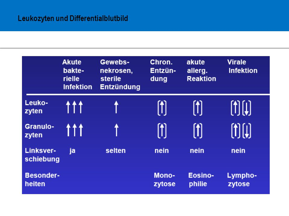 Leukozyten und Differentialblutbild
