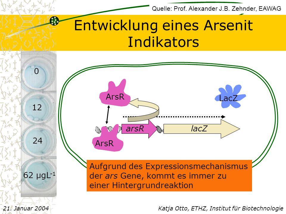 Entwicklung eines Arsenit Indikators
