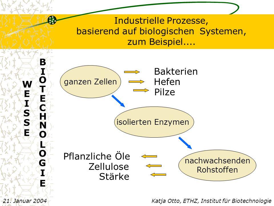 E B I O T C H N L G Bakterien Hefen W E I S Pilze Pflanzliche Öle