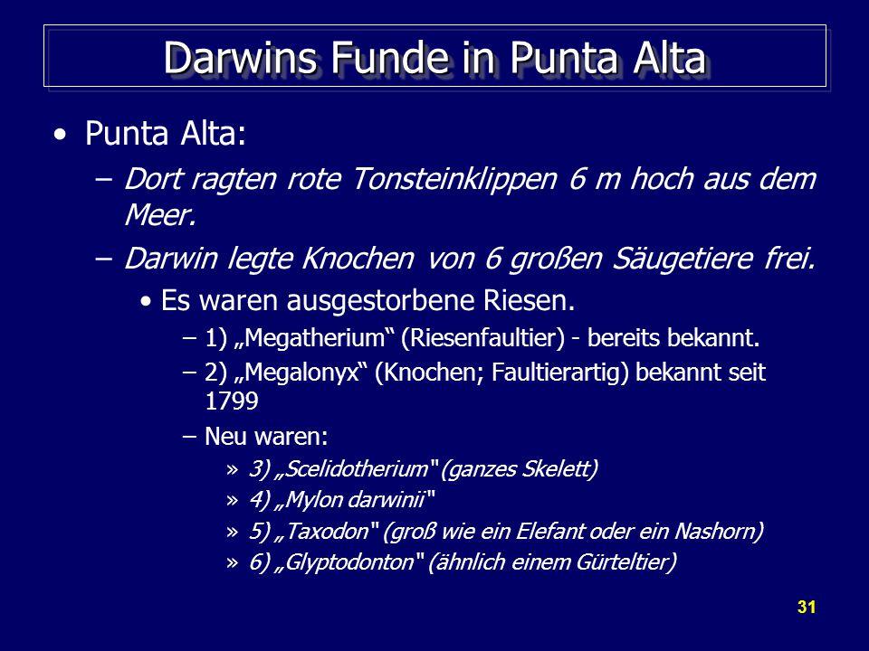Darwins Funde in Punta Alta