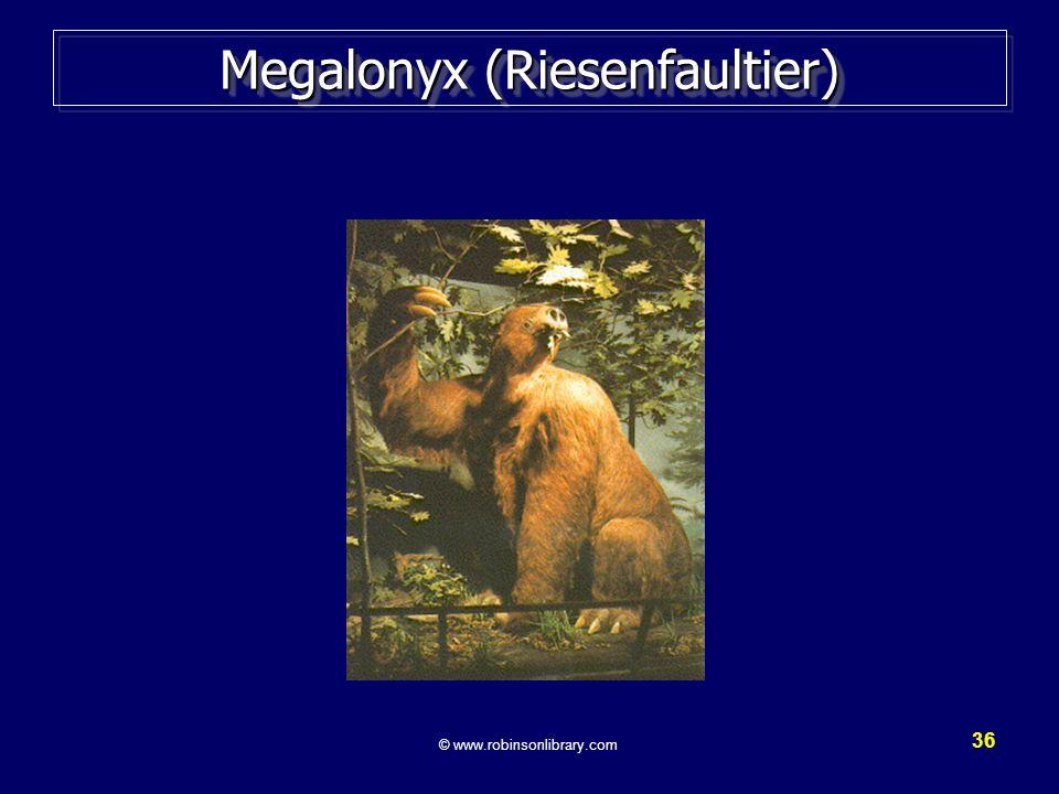Megalonyx (Riesenfaultier)