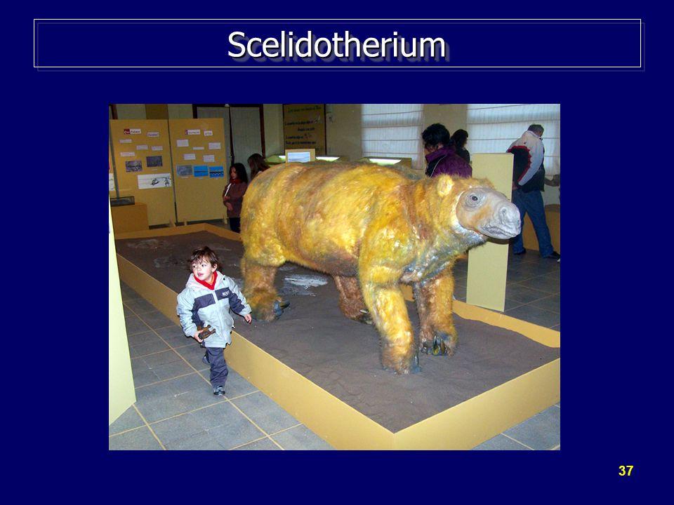Scelidotherium http://www.montehermoso.gov.ar/prensa/imagenes/reaperturamuseo2.jpg (2009)