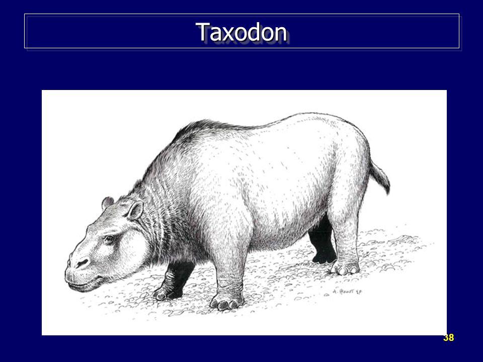 Taxodon