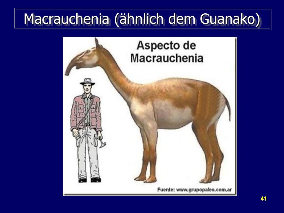 Macrauchenia (ähnlich dem Guanako)