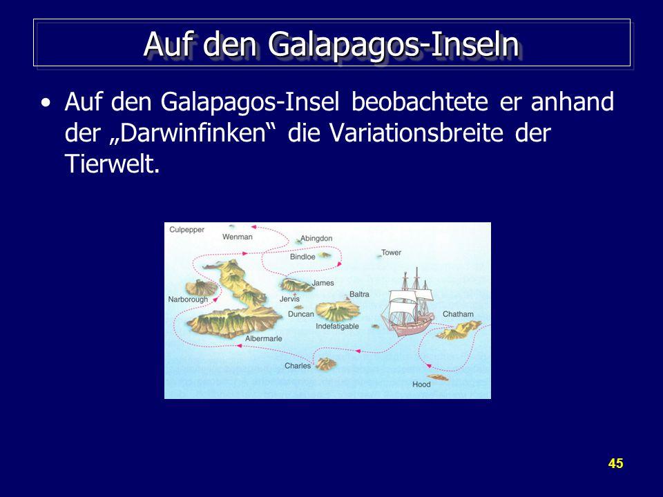Auf den Galapagos-Inseln
