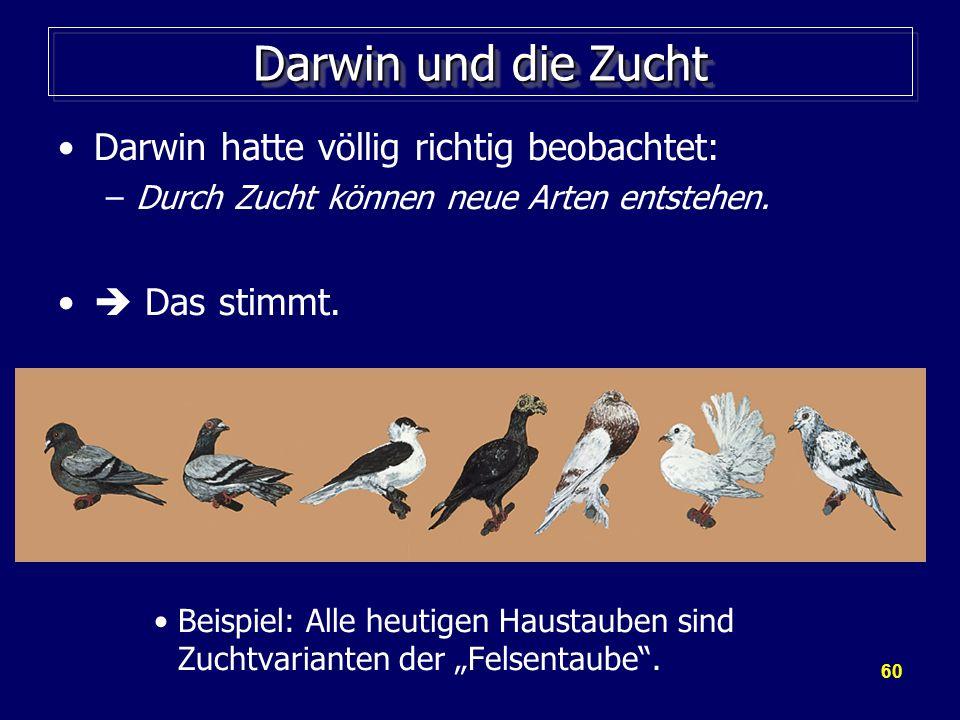 Darwin und die Zucht Darwin hatte völlig richtig beobachtet: