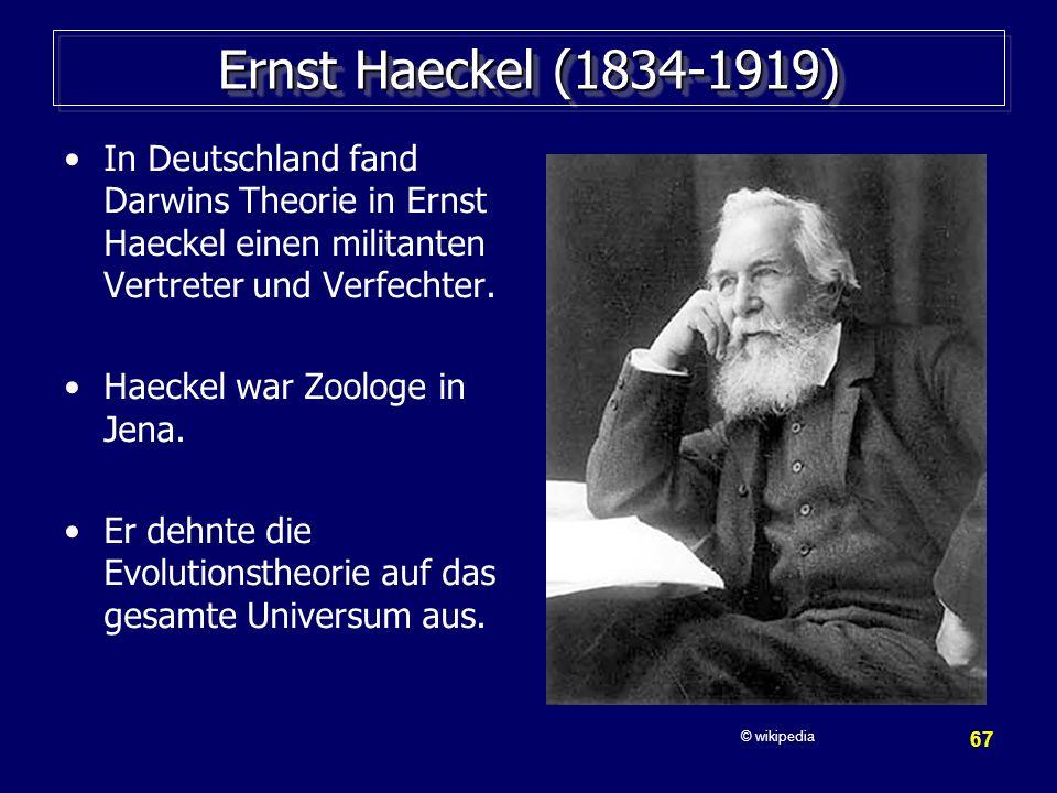 Ernst Haeckel (1834-1919) In Deutschland fand Darwins Theorie in Ernst Haeckel einen militanten Vertreter und Verfechter.
