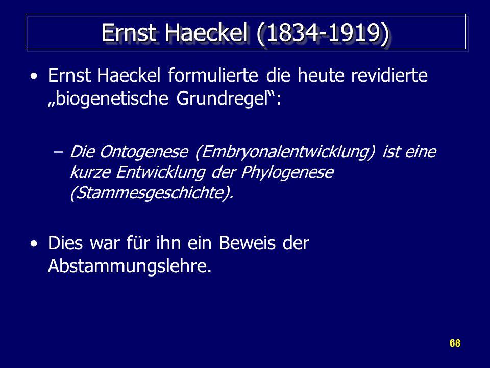 """Ernst Haeckel (1834-1919) Ernst Haeckel formulierte die heute revidierte """"biogenetische Grundregel :"""