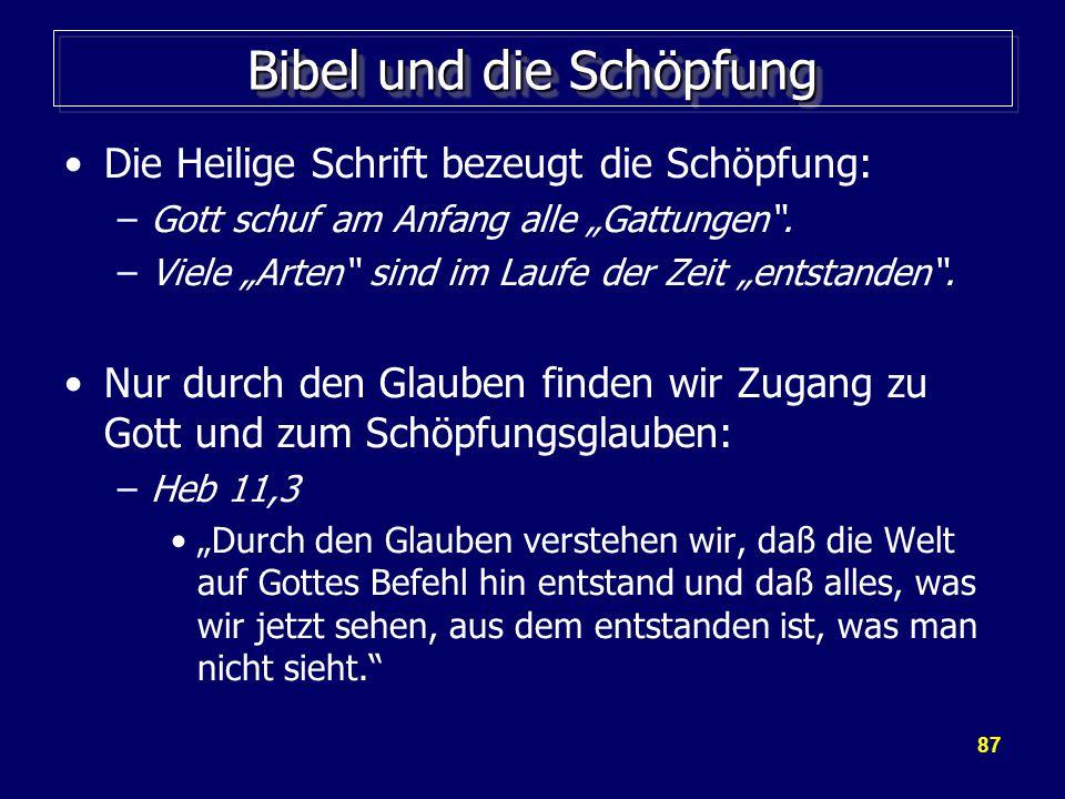 Bibel und die Schöpfung