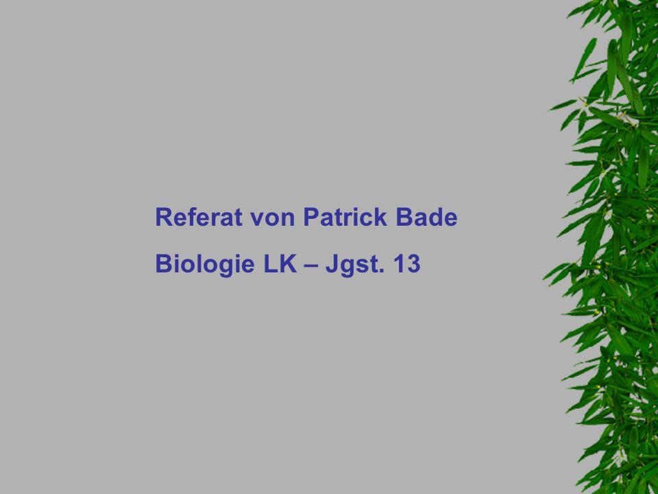 Referat von Patrick Bade