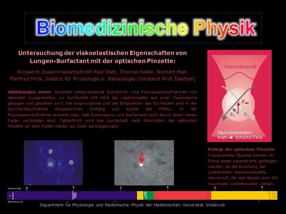 Untersuchung der viskoelastischen Eigenschaften von Lungen-Surfactant mit der optischen Pinzette:
