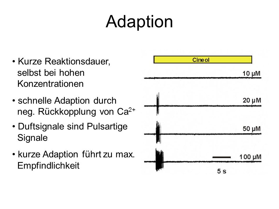 Adaption Kurze Reaktionsdauer, selbst bei hohen Konzentrationen