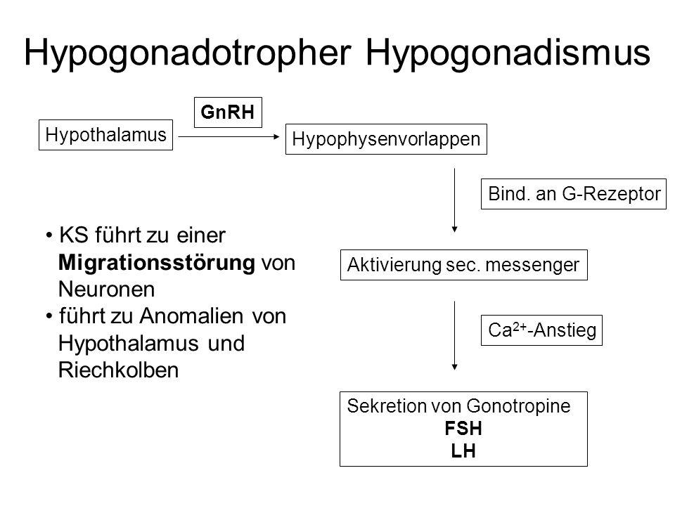Hypogonadotropher Hypogonadismus